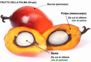 palma-frutto